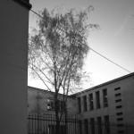 Liceo Respighi - Luigi Moretti - PC